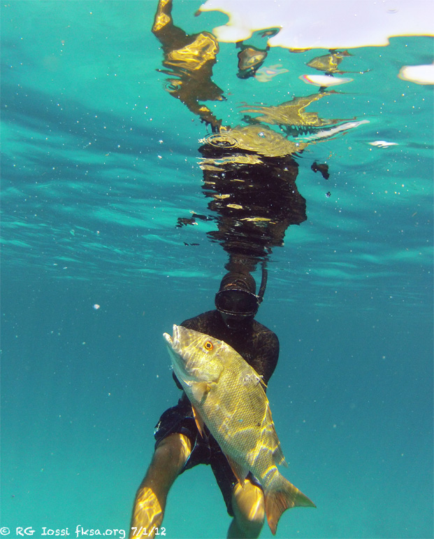 %2070%20Louis%20fish.jpg?m=1342149782